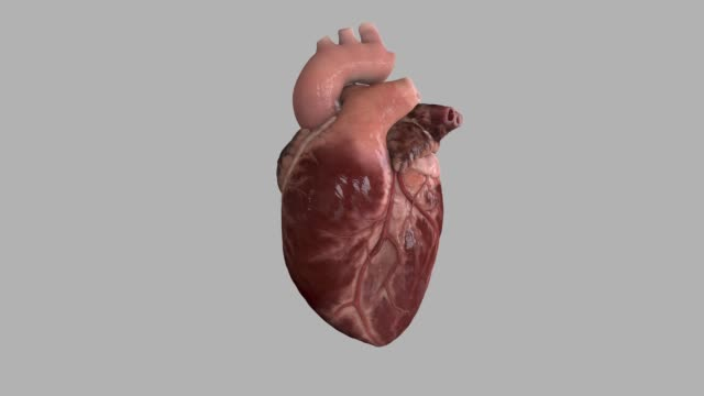 human heart beat - pulsating stock videos & royalty-free footage