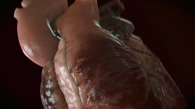 human heart beat - human internal organ stock videos & royalty-free footage