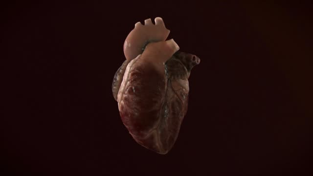 human heart beat - human heart stock videos and b-roll footage
