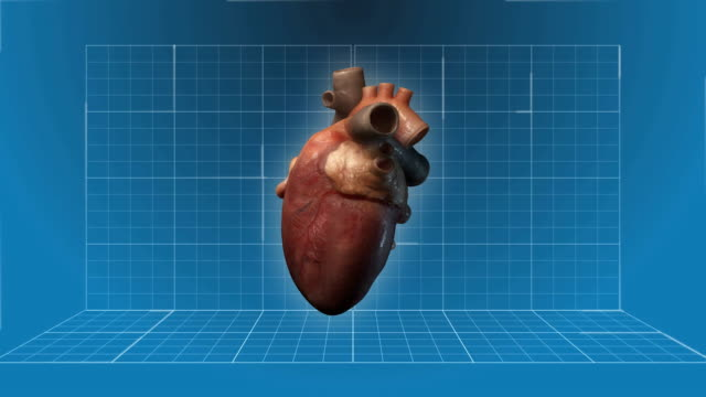 human heart beating - 360 turnaround - listening to heartbeat stock videos and b-roll footage