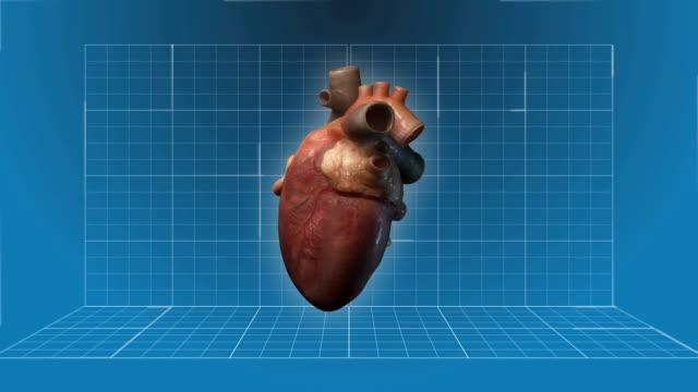 Human Heart beating - 360 turnaround