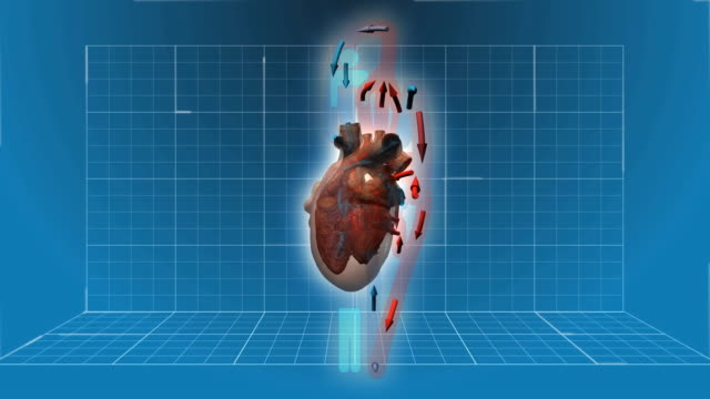 Human Heart beating - 360 turnaround with circulation