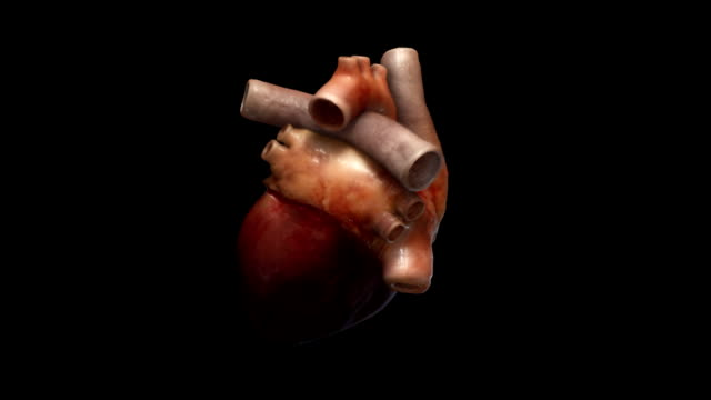 Human Heart beating