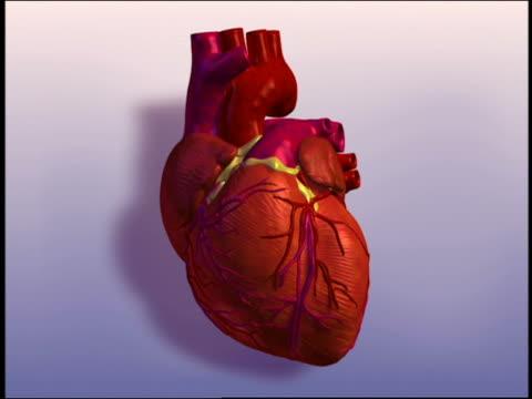 cgi human heart pulsating + turning - biomedical illustration stock videos & royalty-free footage