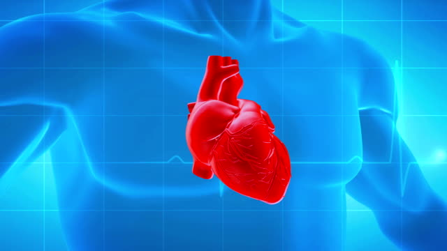 human heart - pulsating stock videos & royalty-free footage