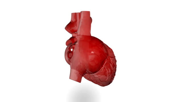 human heart (loopable) - anatomy stock videos & royalty-free footage