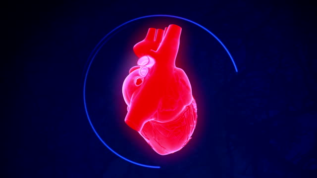 human heart - human heart stock videos & royalty-free footage