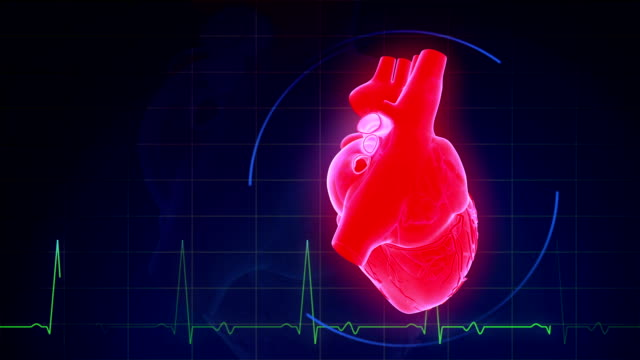 human heart with pulse waveform - pulsating stock videos & royalty-free footage