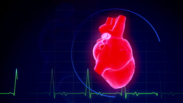 human heartbeat with pulse waveform - pulsating stock videos and b-roll footage