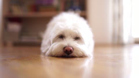 human let me sleep ! - flooring stock videos & royalty-free footage