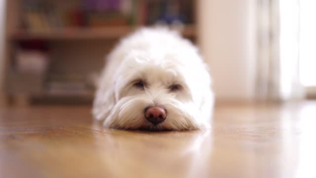 human let me sleep ! - tranquil scene stock videos & royalty-free footage