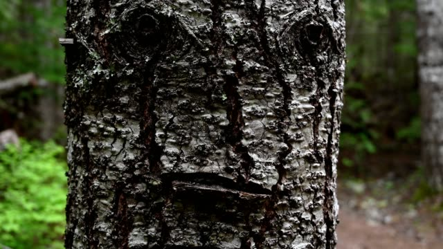 human looking face in nature - alder tree stock videos & royalty-free footage