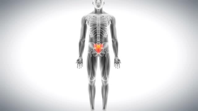 human lower back - 仙骨点の映像素材/bロール