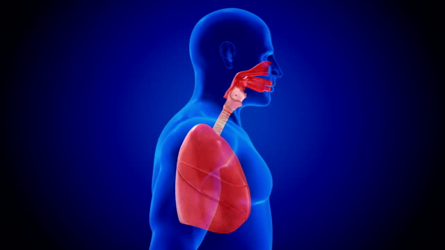 human lung respiratory system abstract - respiratory machine stock videos & royalty-free footage