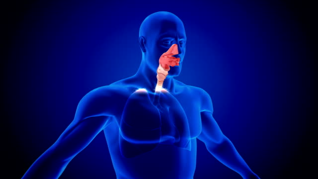 human lung respiratory system scan - respiratory system stock videos & royalty-free footage