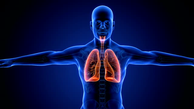 human lung respiratory system scan - illustration stock videos & royalty-free footage