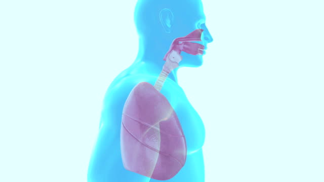 human lung respiratory system - respiratory machine stock videos & royalty-free footage