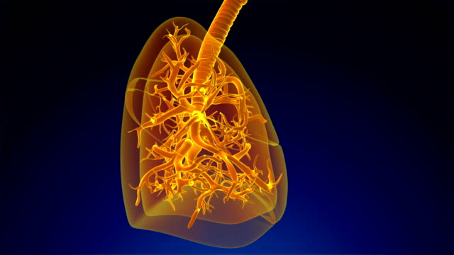 human lung respiratory system - human lung stock videos & royalty-free footage