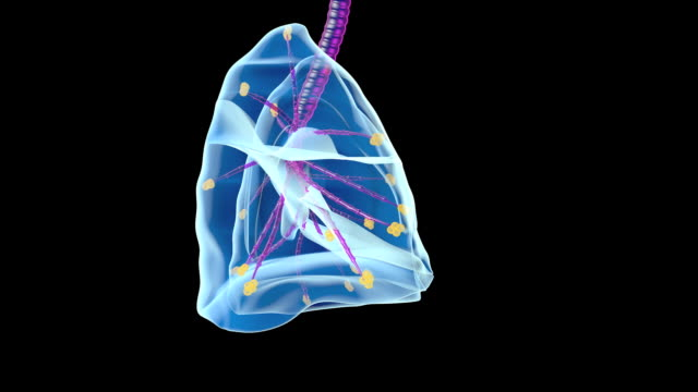 human lungs - bronchi stock videos & royalty-free footage