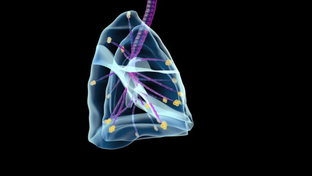 human lungs - biomedical illustration stock videos & royalty-free footage