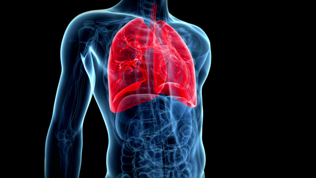human lungs - respiratory system stock videos & royalty-free footage