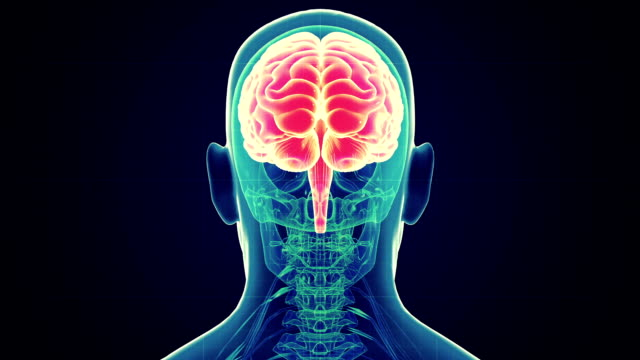 human male brain scan - human brain stock videos & royalty-free footage