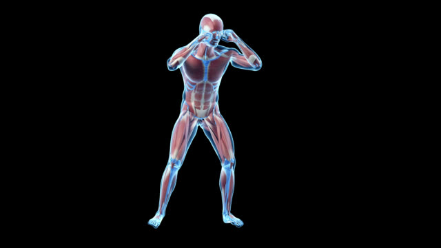human muscular system - figura maschile video stock e b–roll