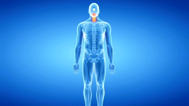 human neck bones - cervical vertebrae stock videos & royalty-free footage