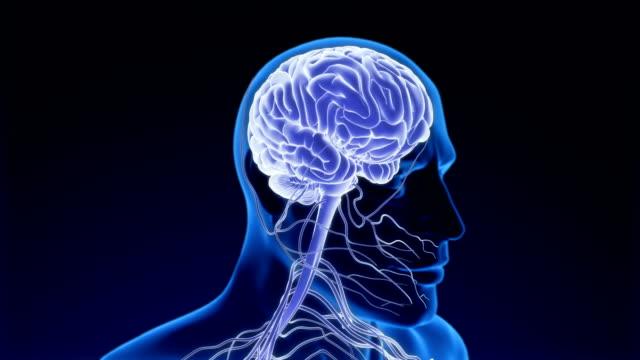 menschliches nervensystem - human brain stock-videos und b-roll-filmmaterial