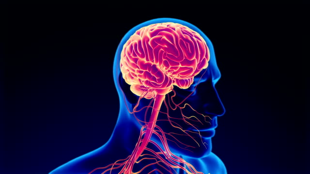 human nervous system - sensory perception stock videos & royalty-free footage