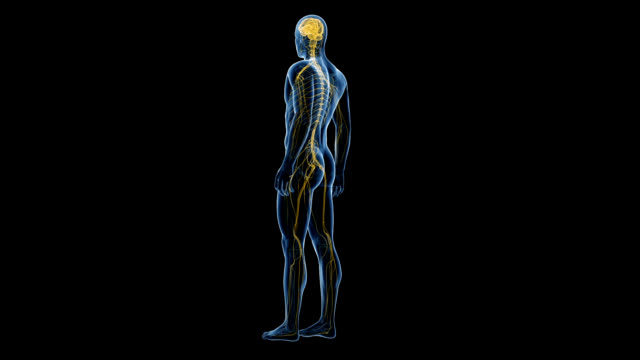 human nervous system - human nervous system stock videos & royalty-free footage