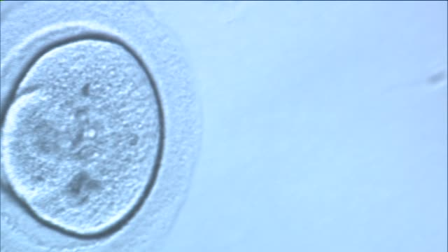 human oocyte cryopreservation on september 17, 2014 in new york city. - menschliche fruchtbarkeit stock-videos und b-roll-filmmaterial