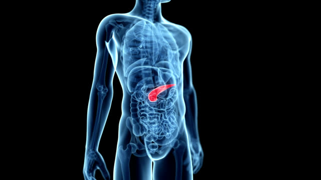 human pancreas - human bone stock videos & royalty-free footage