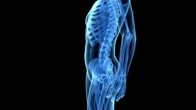 human pelvis - 骨盤点の映像素材/bロール