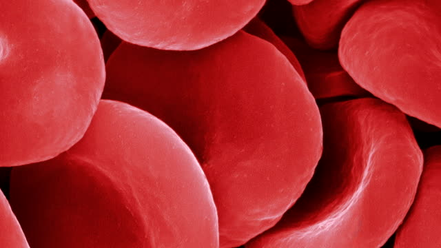 Human red blood cells, SEM