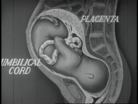 stockvideo's en b-roll-footage met human reproduction educational - 11 of 14 - image