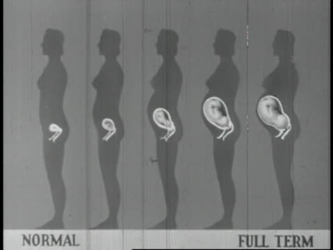 human reproduction educational - 13 of 14 - menschliche fruchtbarkeit stock-videos und b-roll-filmmaterial