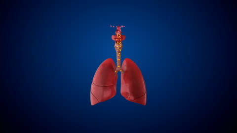 human respiratory system lungs - anatomy stock videos & royalty-free footage