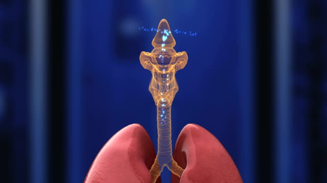 human respiratory system - thyroid gland stock videos & royalty-free footage