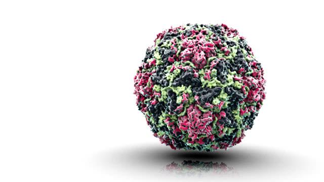 human rhinovirus - rna virus stock videos & royalty-free footage