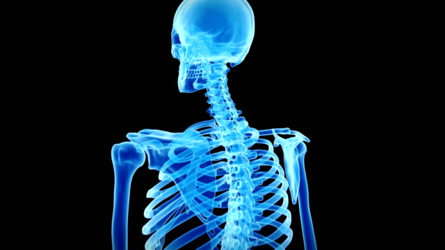 human skeletal system - human skeleton stock videos and b-roll footage