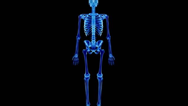 human skeletal system - knochen im beckenbereich stock-videos und b-roll-filmmaterial