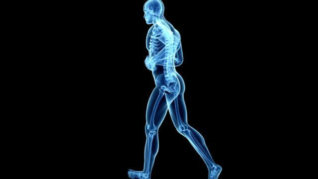 human skeleton, jogging - biomedical illustration stock videos & royalty-free footage