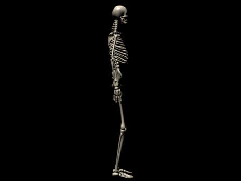 menschliches skelett des mannes für studie - knochen im beckenbereich stock-videos und b-roll-filmmaterial
