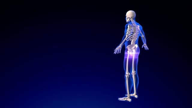 vídeos de stock, filmes e b-roll de esqueleto humano - articulação humana