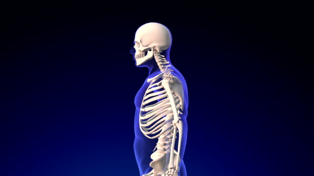 human skeleton - neck stock videos & royalty-free footage