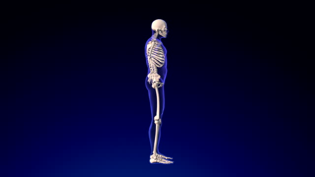 human skeleton - limb body part stock videos & royalty-free footage