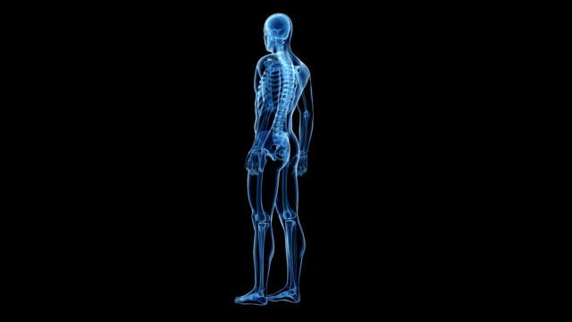 human skeleton - människoben bildbanksvideor och videomaterial från bakom kulisserna