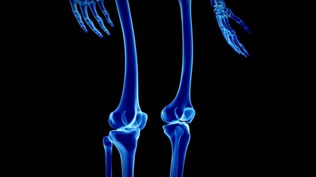 human skeleton - human skeleton stock videos and b-roll footage