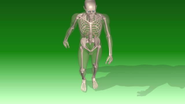 vídeos y material grabado en eventos de stock de human skeleton walking - ilustración biomédica